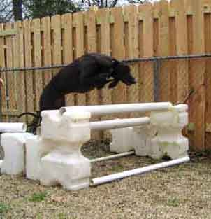 Black Greyhound jumping over an obstacle, facing right, full body profile